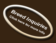 Click here to request more information about the breed.